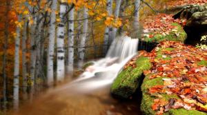 сосны у водопада